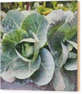 Large Leaves Of A Cabbage Plant Wood Print
