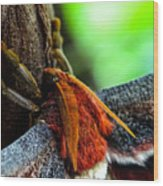 Large Moth Macro Wood Print