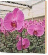 Large Orchid Nursery Wood Print