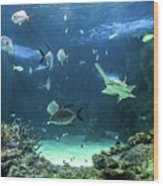 Large Sawfish And Other Fishes Swimming In A Large Aquarium Wood Print
