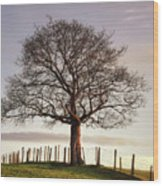 Large Tree Wood Print by Jon Baxter