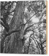 Large Tree Wood Print