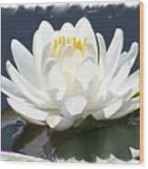 Large Water Lily With White Border Wood Print