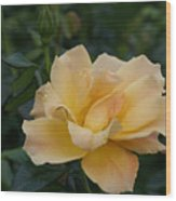 Large Yellow Rose II Wood Print