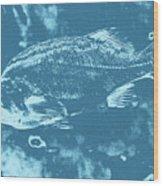 Largemouth Bass 8 Wood Print