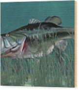 Largemouth Bass Wood Print