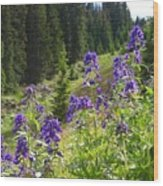 Larkspur Along Trail Ridge Road Wood Print