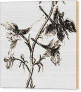 Larkspur  Wood Print