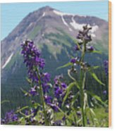 Larkspur Wildflowers Wood Print