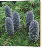 Lasiocarpa Cones Wood Print