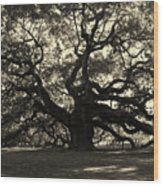 Last Angel Oak 72 Wood Print