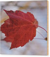 Last Of The Leaves Nature Photograph Wood Print