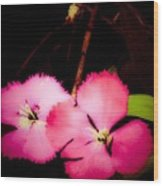 Last Of The Pink Dianthus Flowers Wood Print