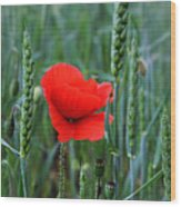 Last Poppy Wood Print