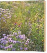 Last Rays Of Sun Light Wildflowers In Moraine Hills Sp Wood Print