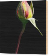 Last Rose Of Summer Wood Print