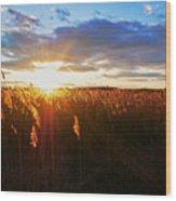 Last Sunset, Plum Island Wood Print