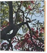 Late Afternoon Tree Silhouette With Bougainvilleas I Wood Print
