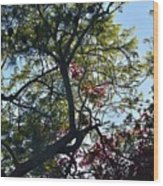 Late Afternoon Tree Silhouette With Bougainvileas II Wood Print