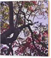 Late Afternoon Tree Silhouette With Bougainvilleas IIi Wood Print