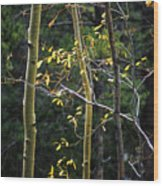 Late Aspen Wood Print