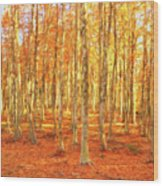 Late Autumn In Calabria Wood Print