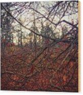 Late Autumn Morning Wood Print