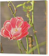 Late Beauty Between Thorns Wood Print