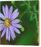 Late Purple Aster Wood Print