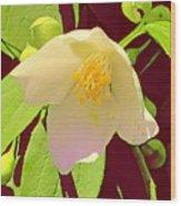 Late Spring Flower Wood Print
