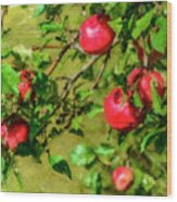 Late Summer Apples Wood Print