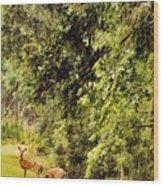 Late Summer Deer Wood Print