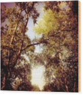 Late Summer View Of Sky And Trees Wood Print