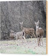 Late Winter Whitetails Wood Print