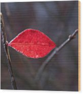 Lateral Red Leaf Wood Print