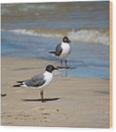 Laughing Gulls On The Beach Wood Print