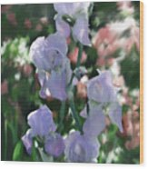 Laughing Iris Wood Print