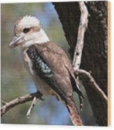 Laughing Kookaburra A Wood Print