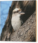 Laughing Kookaburra  Wood Print