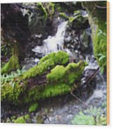 Laughing Waters Wood Print by JoAnn SkyWatcher
