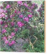 Laurel Mountain Tree Wood Print