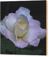 Laurie's Rose Wood Print