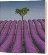Lavander Field Luberon Wood Print
