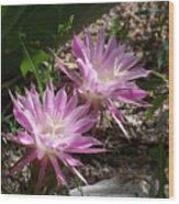 Lavendar Cactus Flowers Wood Print