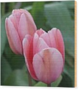 Lavendar  Pink Tulip Wood Print