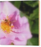 Lavendar Rose With Bee Wood Print