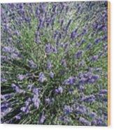 Lavender 2 Wood Print