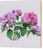 Lavender And Rose Hydrangeas Wood Print