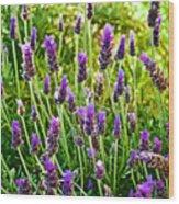 Lavender At Pilgrim Place In Claremont-california Wood Print