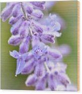 Lavender Blooms Wood Print